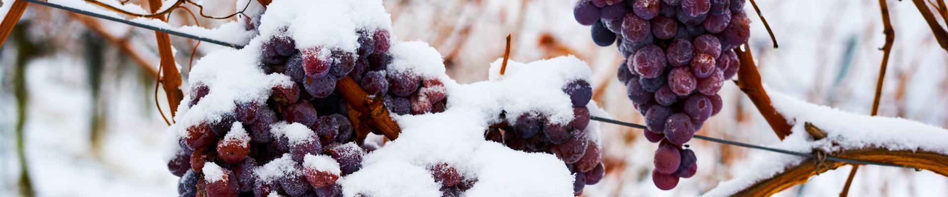 Winter is Here: Três Motivos para Abastecer sua Adega Neste Inverno
